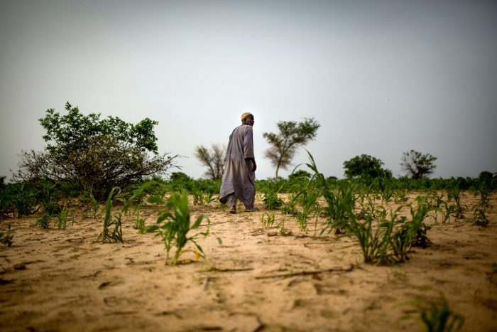 Man walking over a dry field, looking over his stunted crops in the Zinder region of Niger.